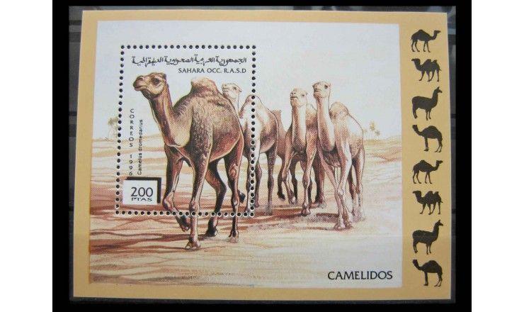 """Сахарская Арабская ДР 1996 г. """"Верблюды"""""""