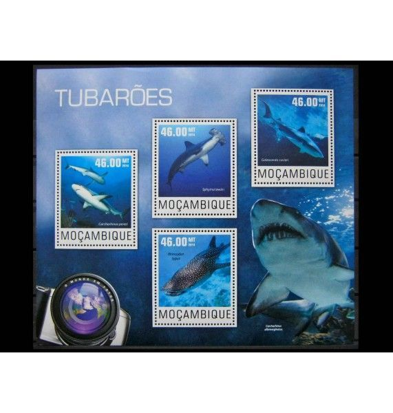 "Мозамбик 2014 г. ""Акулы"""