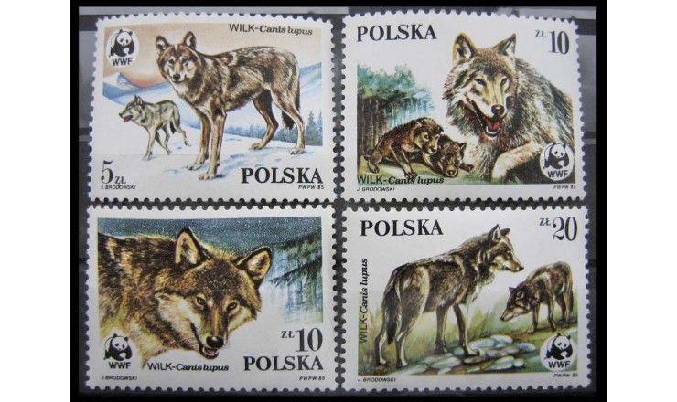 """Польша 1985 г. """"Волк"""""""